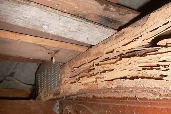 3 Most Common Types of Termites You Can Find in California