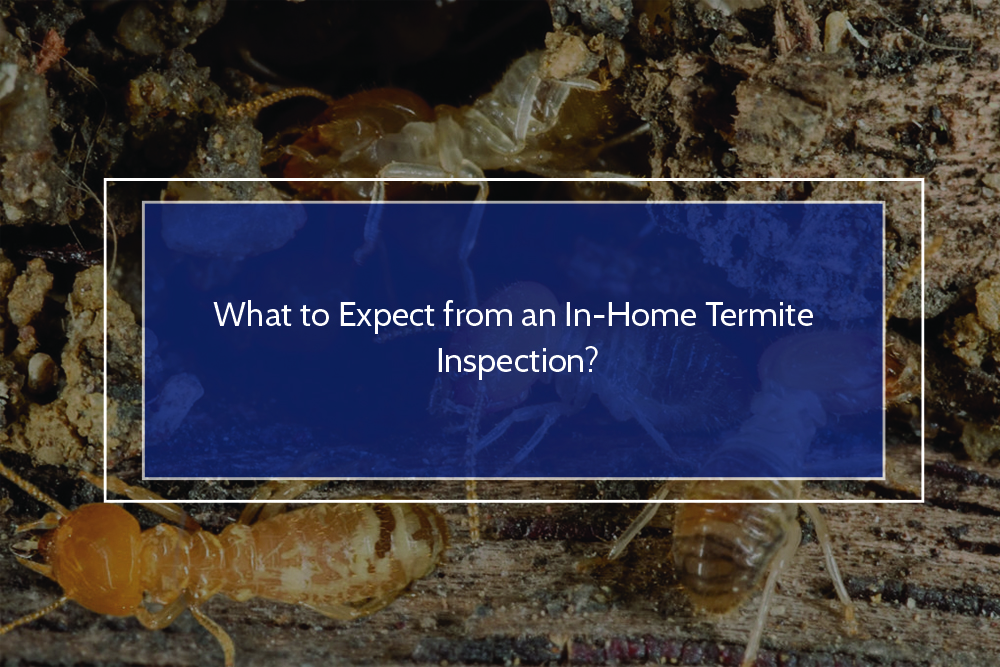 What to Expect from an In-Home Termite Inspection?