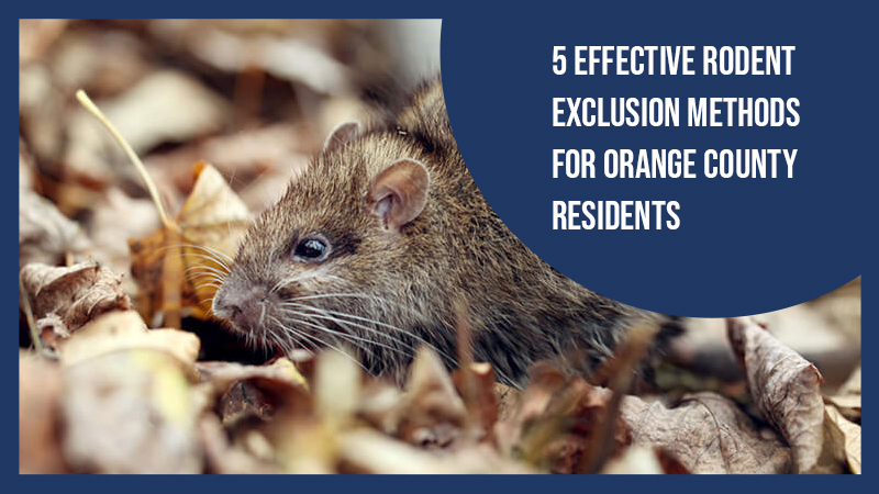 5 Effective Rodent Exclusion Methods for Orange County Residents